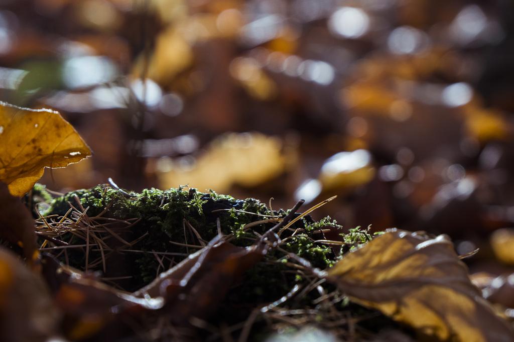 bos natuur mos